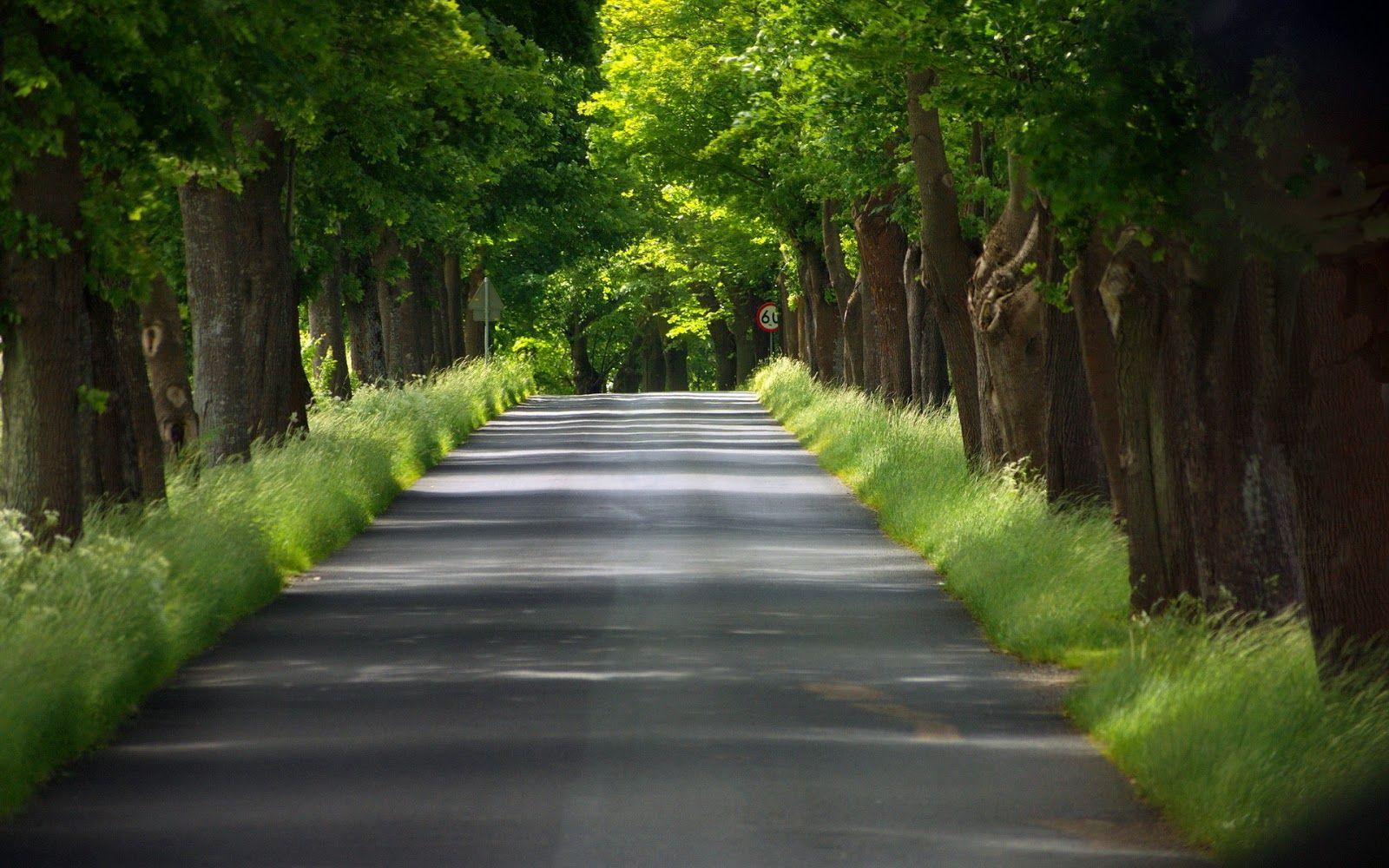 carretera-con-arboles