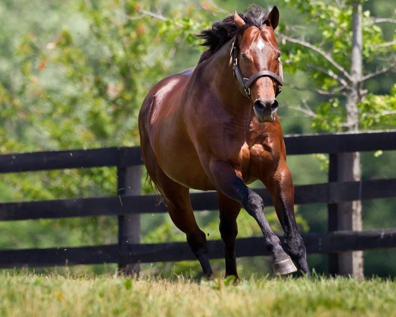 Ghostzapper (USA) Horses, Virtual horse racing, Horse