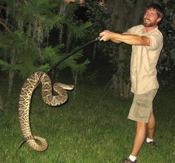 Largest Eastern Diamondback Rattlesnake | Friend of a ...