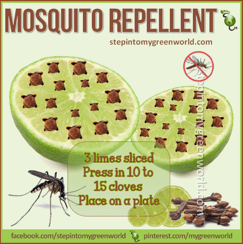 mosquito repellent ❥ #Love #Gratitude ~ StepIntoMyGreenWorld.com ❥ALSO check-out http://godsgarde… - Mosquito repellent, Mosquito, Diy mosquito repellent - 웹