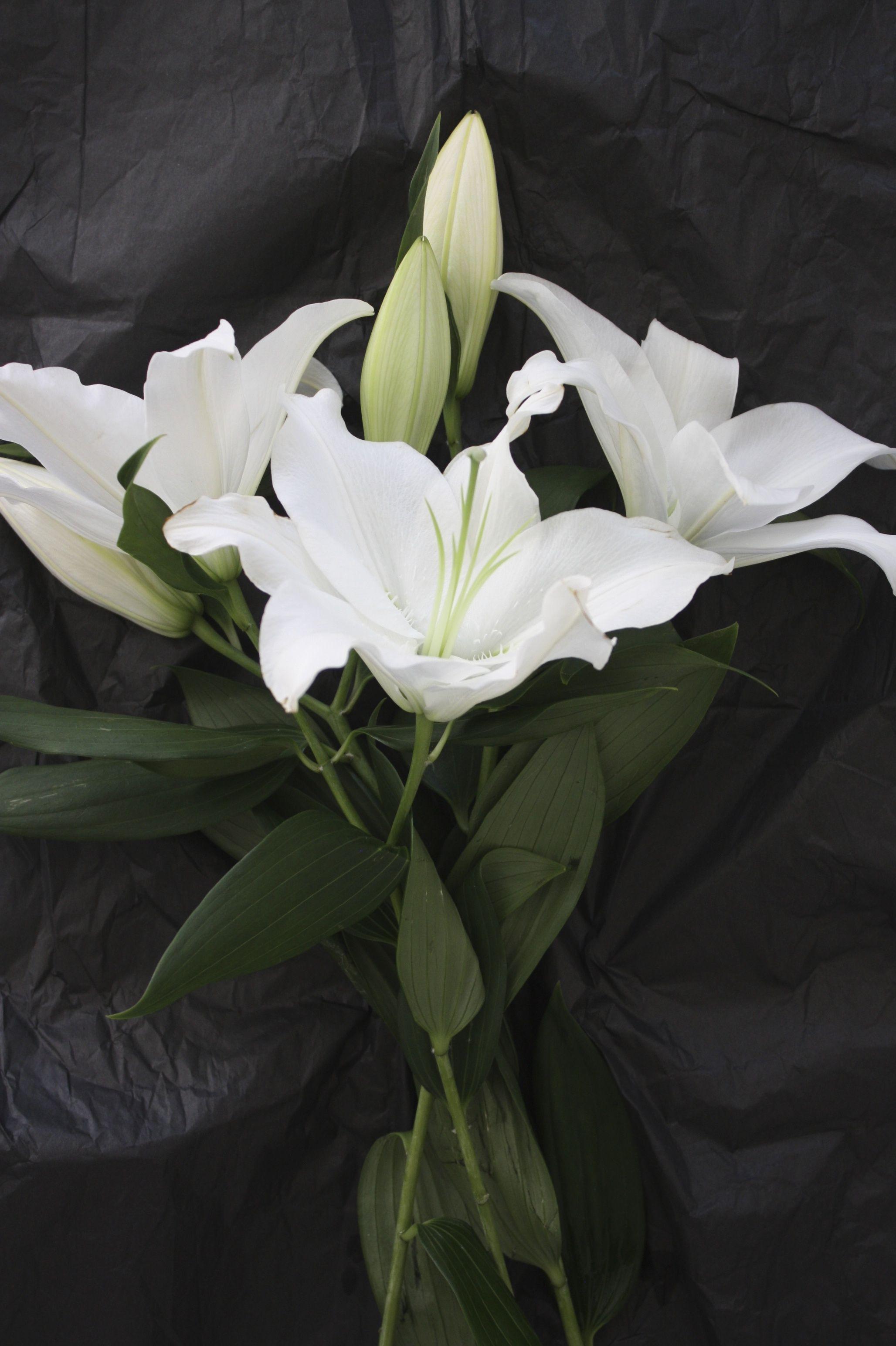 Perjantaipuska ja pullo pinterest white lilies flowers and flora homevialaura white lilies izmirmasajfo