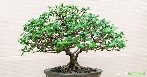 Gesunde Luft Diese Zimmerpflanzen Entgiften Und Befeuchten Die Raumluft Zimmerpflanzen Pflanzen Schlafzimmer Pflanzen