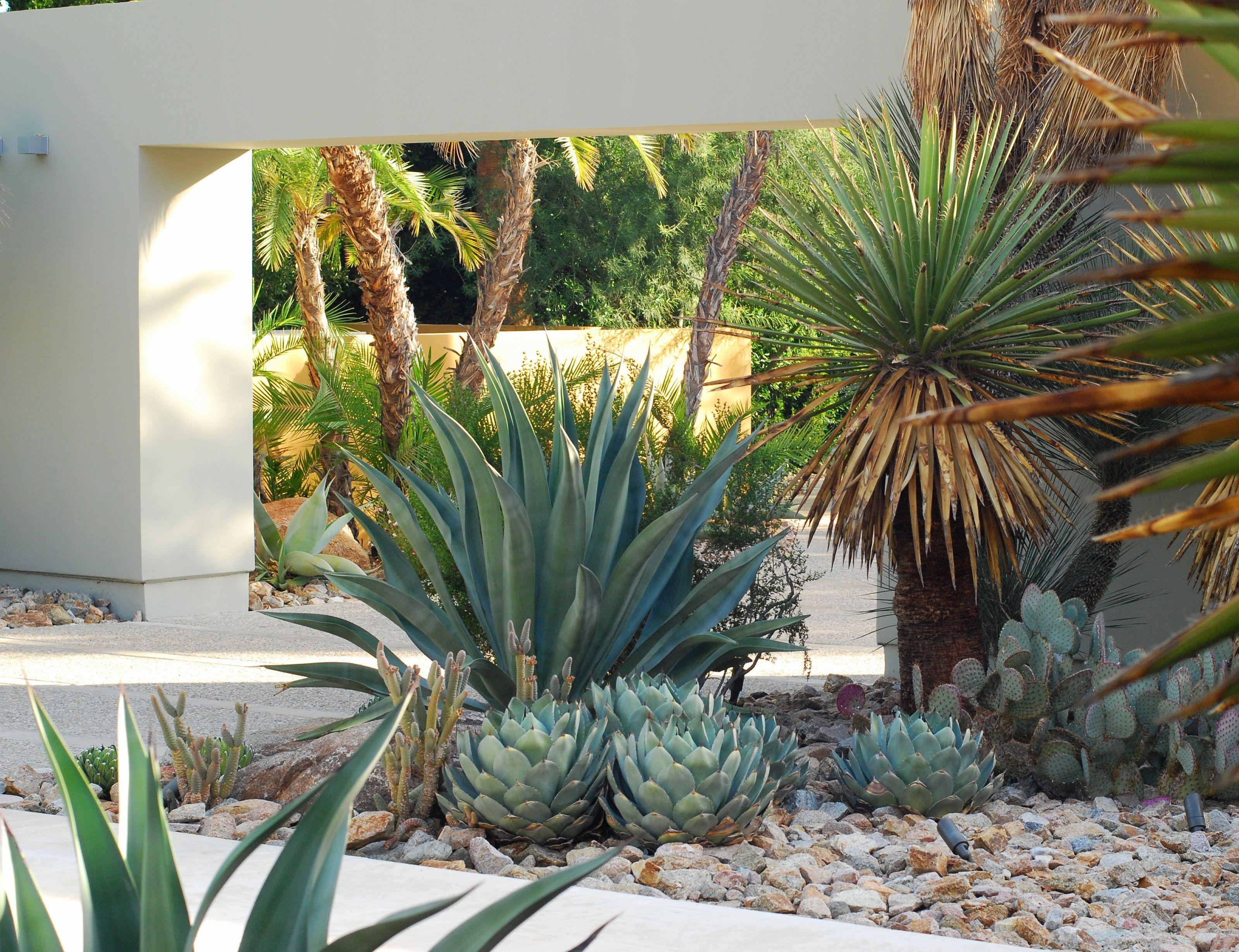 image result for modern palms springs landscape architecture