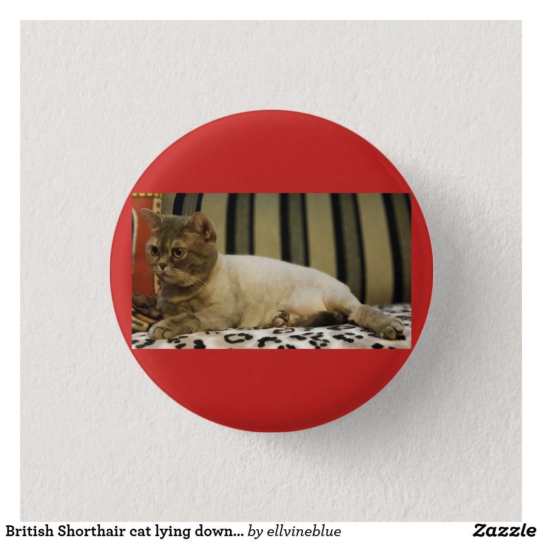 British Shorthair Cat Lying Down On Sofa 3 Cm Round Badge British Shorthair Cats British Shorthair Cat Love
