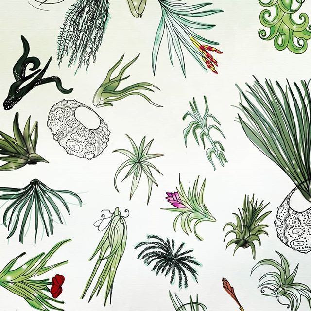 Luftpflanzen Berlin a tillandsia collection with @tinyillustrations i just love it