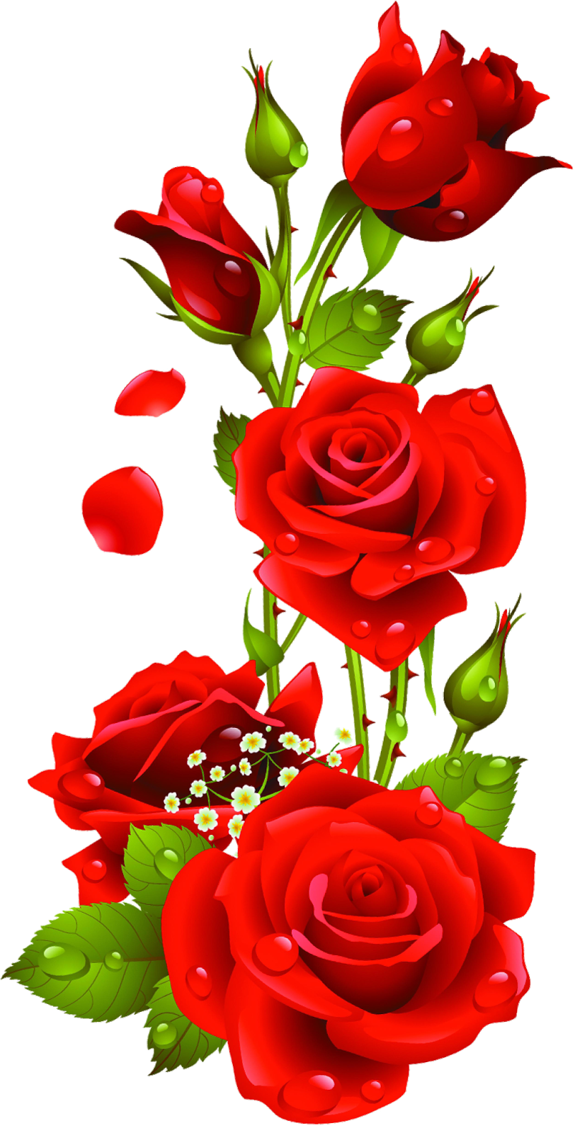 Roses 282 29 Png 812 1600 Beautiful Rose Flowers Flower Phone Wallpaper Rose Flower Wallpaper