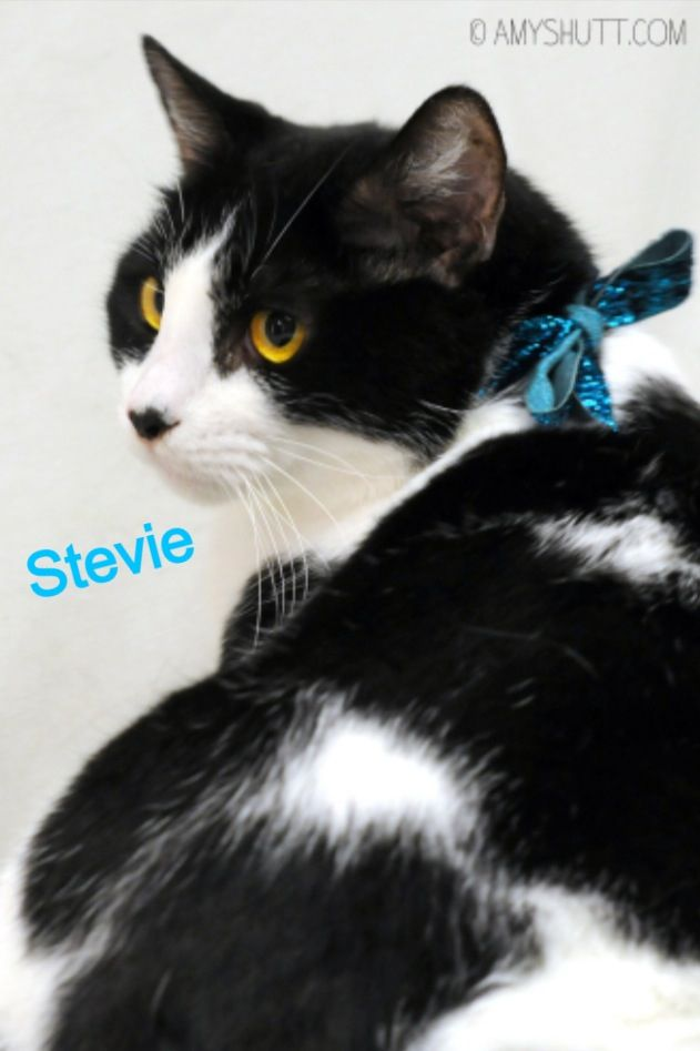 Stevie is available for adoption through APAWS in Baton Rouge, LA. For more info visit www.apawspets.org