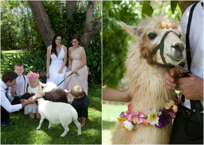 Farm Animals At Wedding Childrens Wedding Entertainment Country