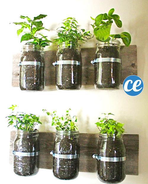 Comment Transformer Des Bocaux En Jardin d'Herbes Aromatiques.