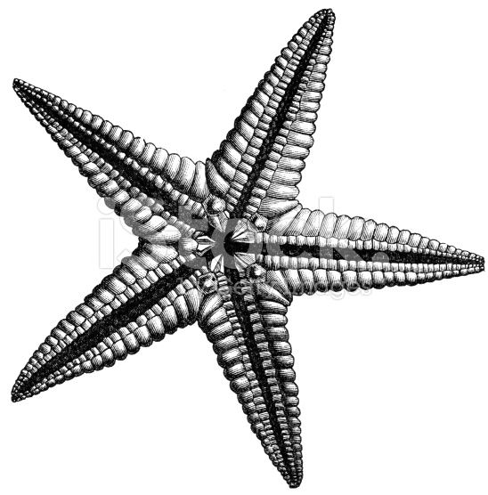 starfish illustration google search coral reef en 2018. Black Bedroom Furniture Sets. Home Design Ideas