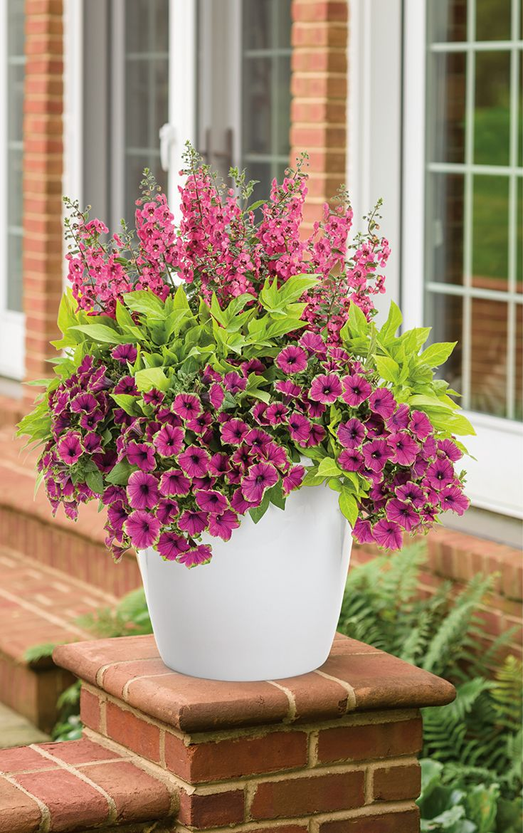 39 breathtaking 39 is a container recipe that will love the for Easy maintenance plants and flowers