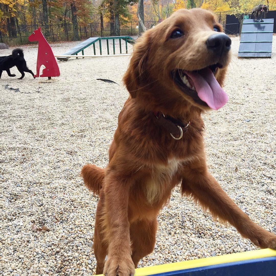 #tot from the agility park by teddydoingstuff