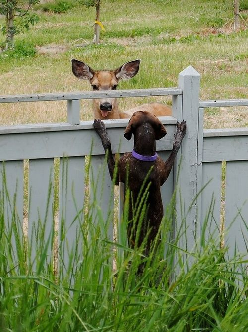 Good fences -- wanna play? Stuff I like Pinterest Perros
