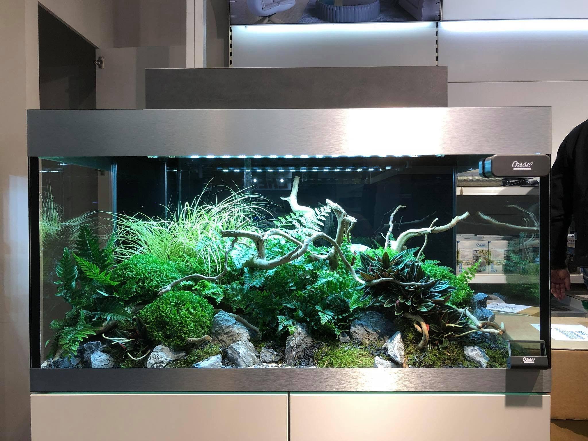 Aquarium wohnzimmer ~ Sud amerika biotop aquarium blackwater aquariums