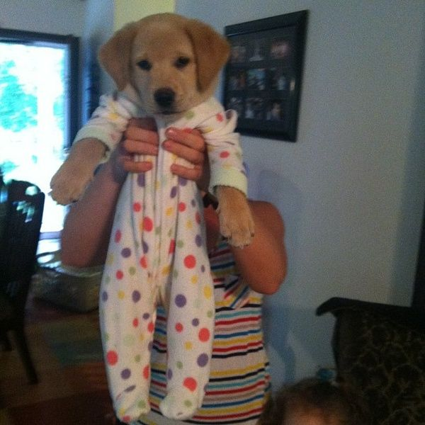 A puppy in footy pajamas. I can't even handle this