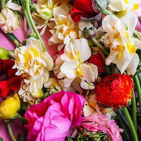 Live Having A Little Spring Flower Obsession Daffodils Ranunculus
