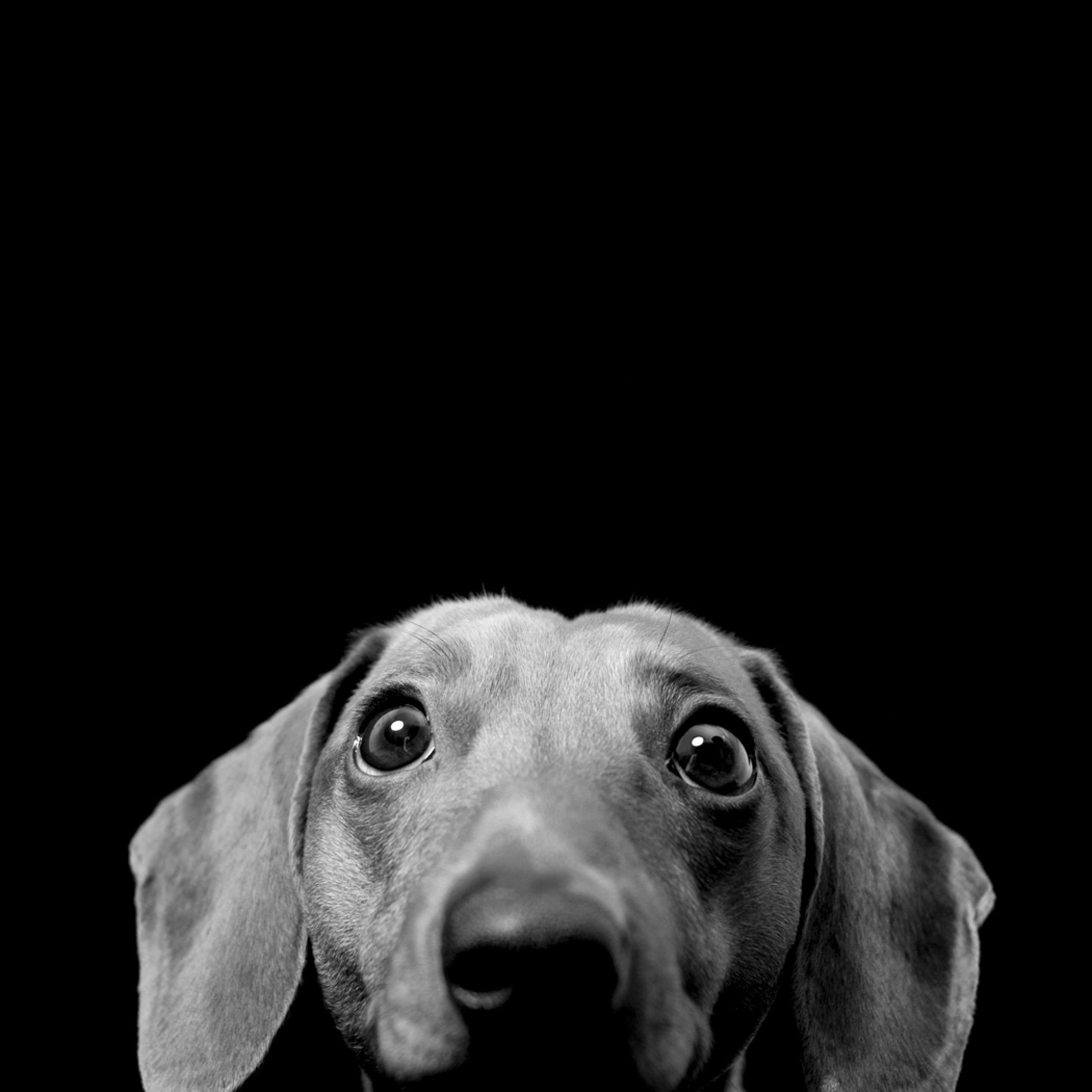 Dog wallpapers for ipad Dachshund Wallpaper! Pinterest