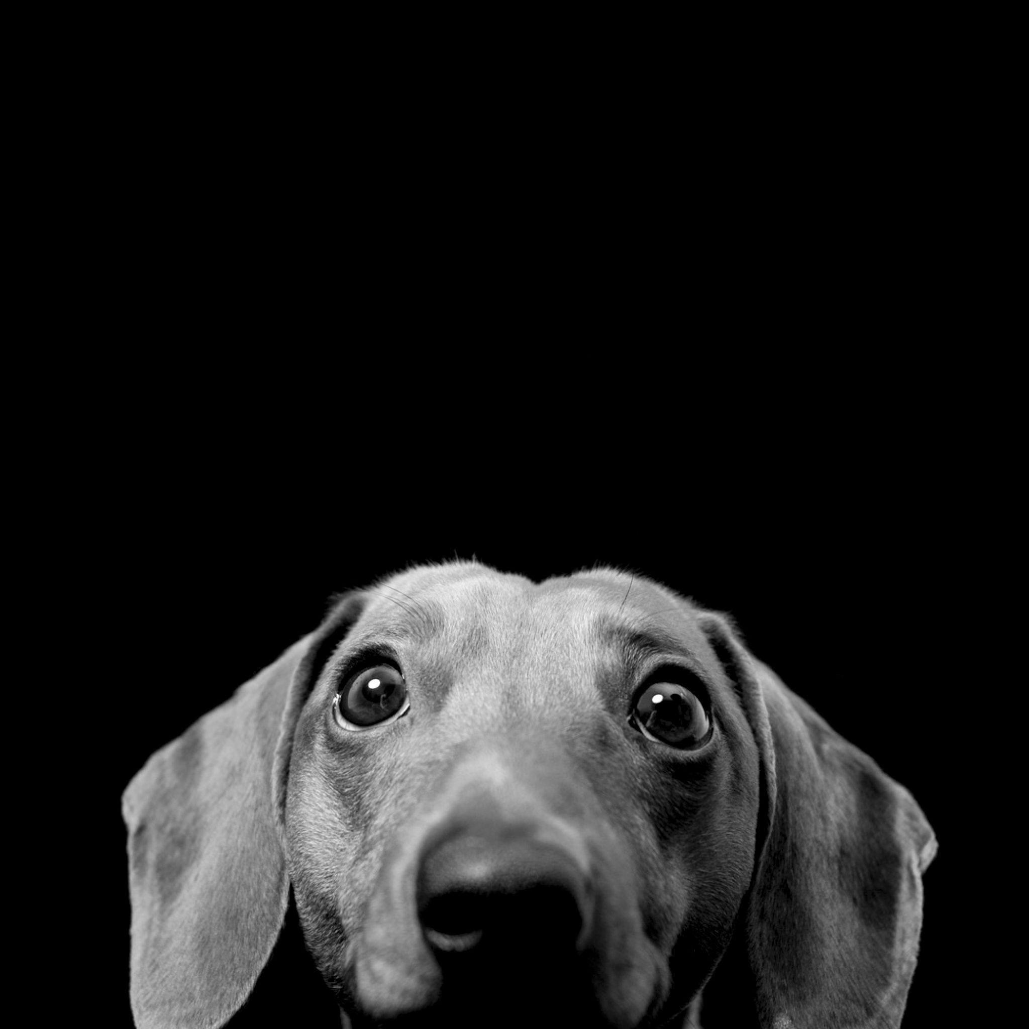 Perros, Mascotas Y Animales