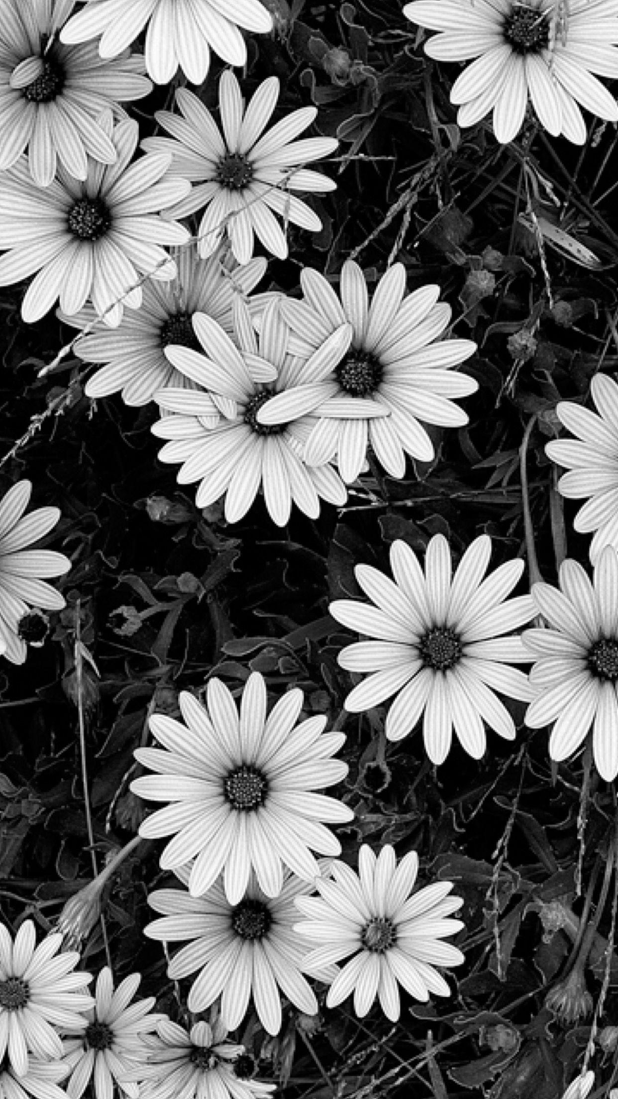 Черно белые обои фото для телефона