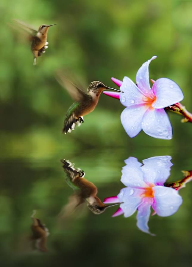All The Pretty Hummingbirds Flowers