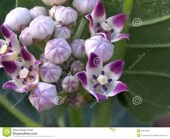 Image result for plants native to cuba