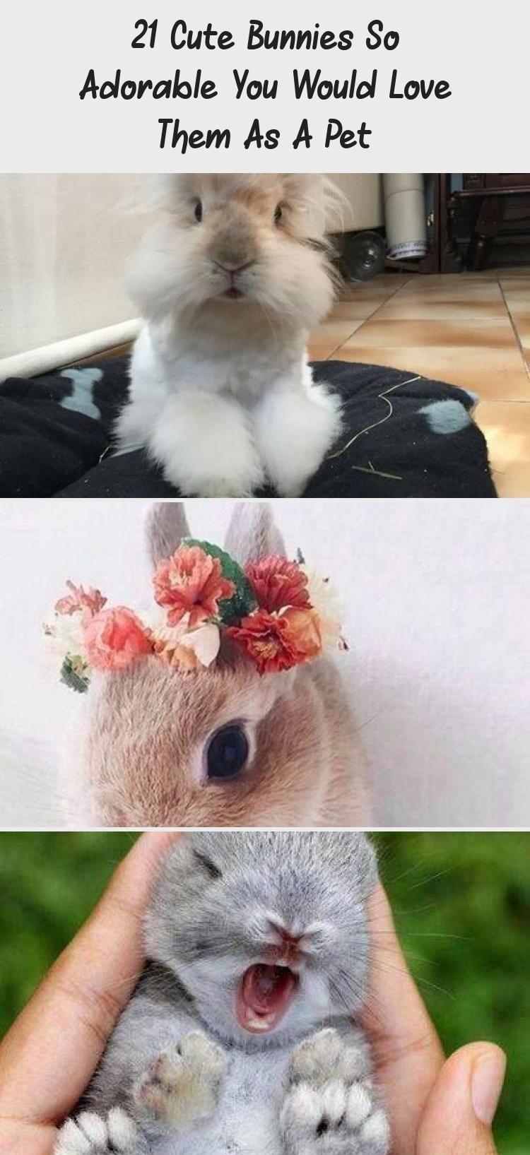 21 Cute Bunnies so Adorable You Would Love them as a Pet - Ritely #AnimalsFunny #AnimalsEnPeligroDeExtincion #AnimalsMemes #AnimalsDomesticos #AnimalsYouDidn'tKnowExisted