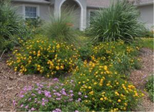 florida friendly yard - list of