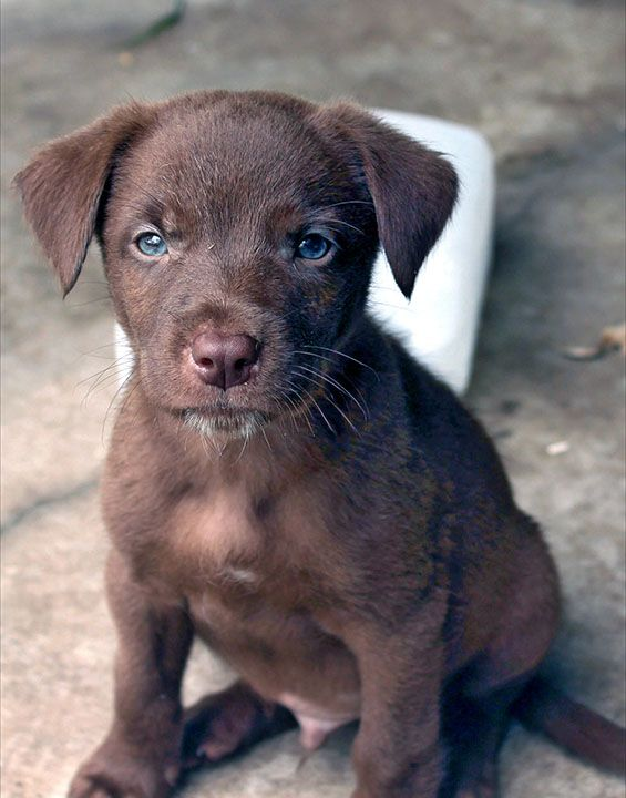 Pin By Darren Driscoll On Australian Koolie Dog Working Dogs Breeds Koolie Dog Dogs