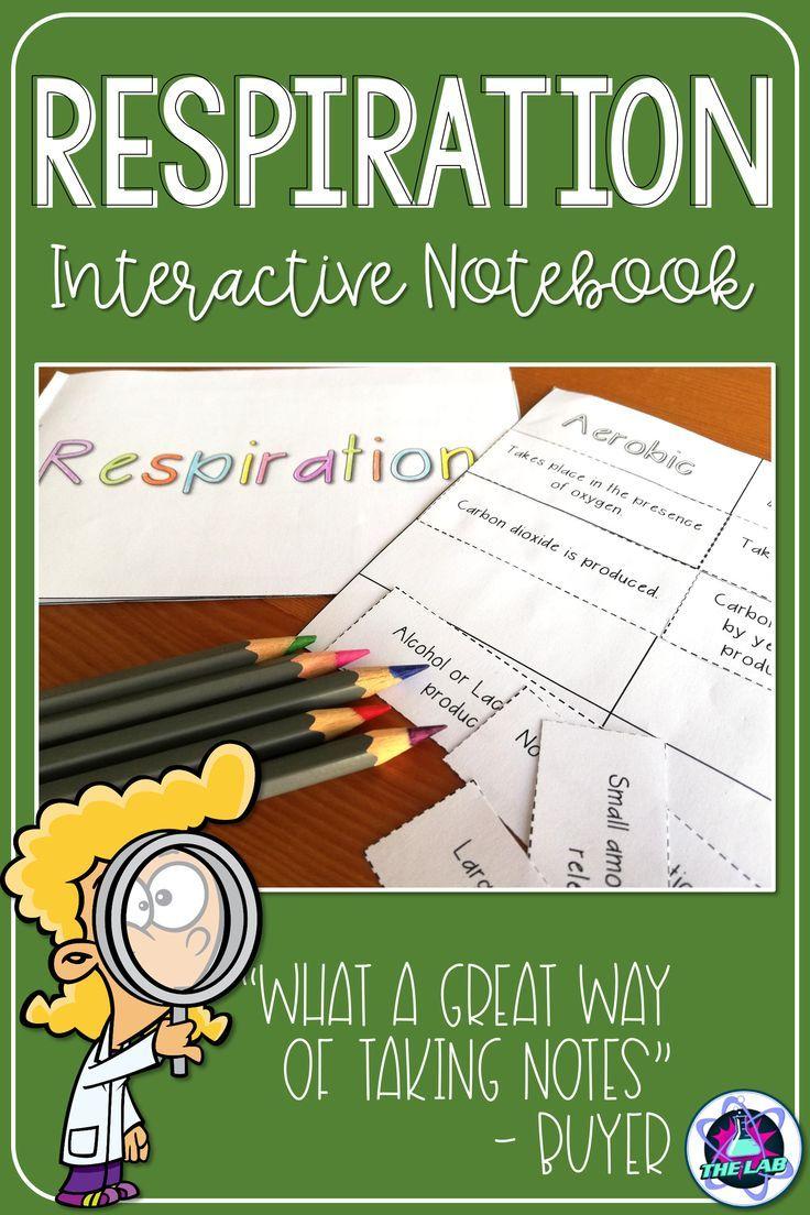 Cellular Respiration Interactive Notebook Activity