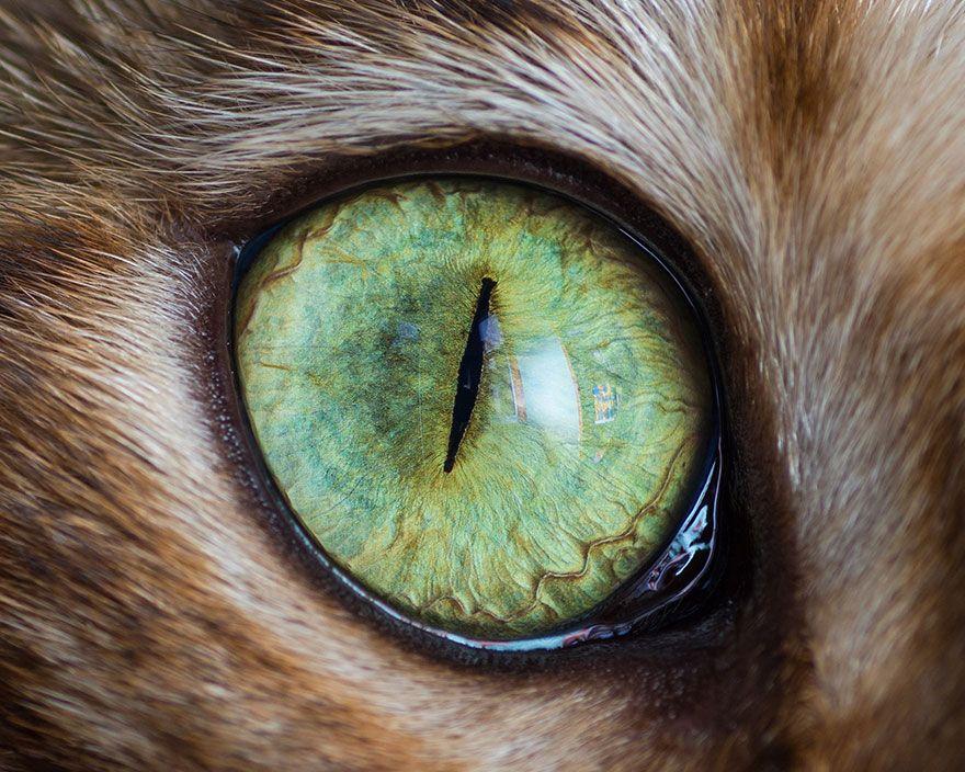 15 Macro Shots Of Cat Eyes From My Recent Cat-O-Shoot | Real Human ...
