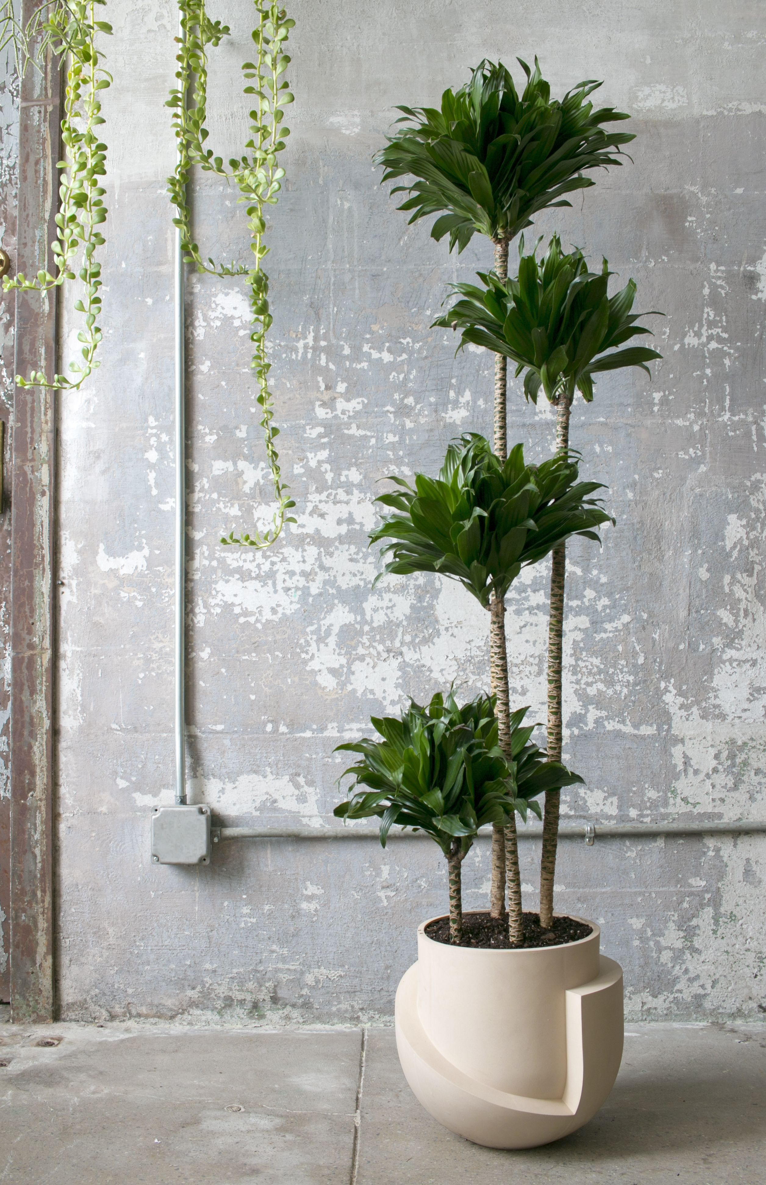 Ceramic Pots For Plants Indoor Finally 20 Oversized Planters Worthy Of Your Fiddle Leaf
