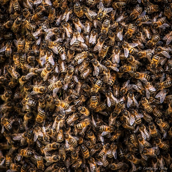 La Famille, photography by Christian Leroy. In Nature, Animal, Insect. La Famille, photography by Christian Leroy. Image #385482