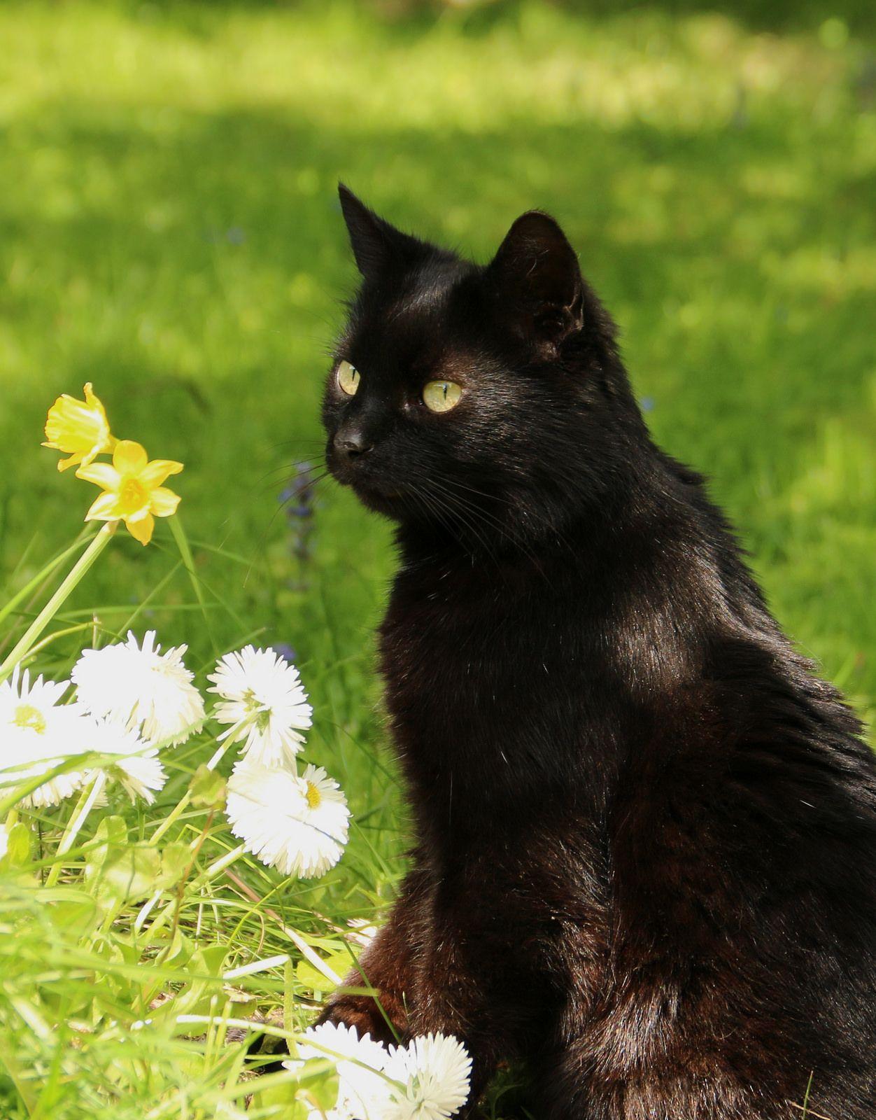 <3  Love black cats