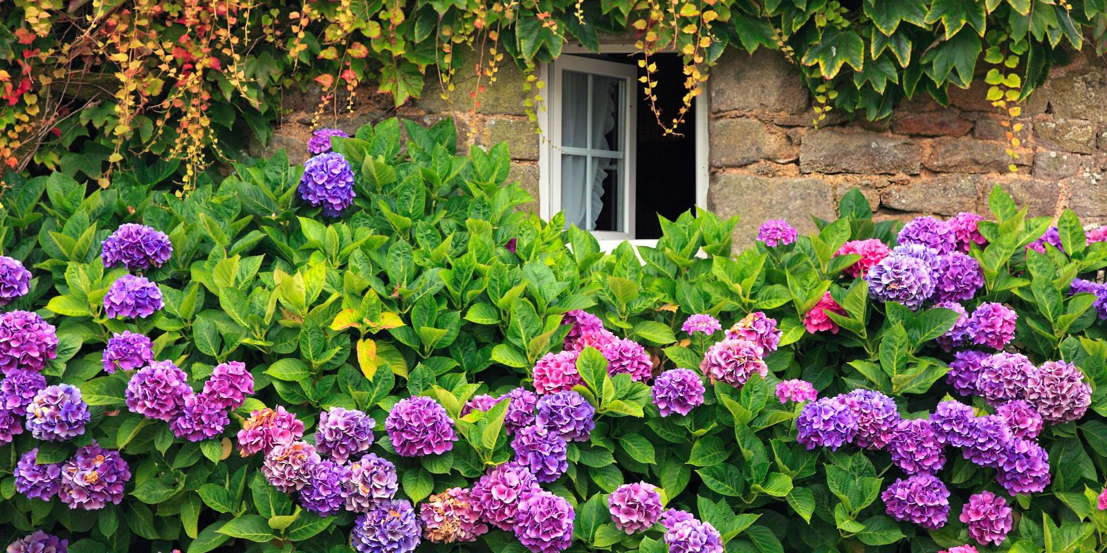 13 Facts Every Hydrangea Enthusiast Needs To Know Plants Hydrangea Beautiful Flowers