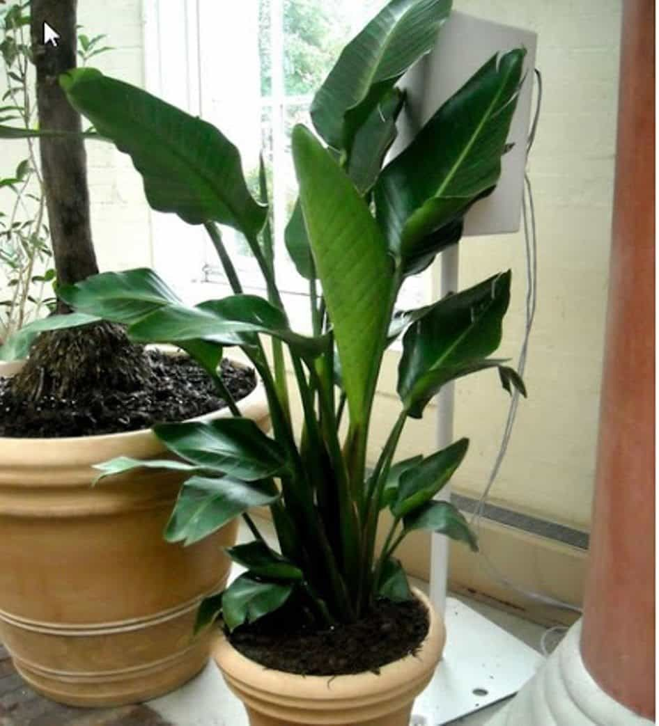 The Care Instructions For Tropical Houseplants Tropical House