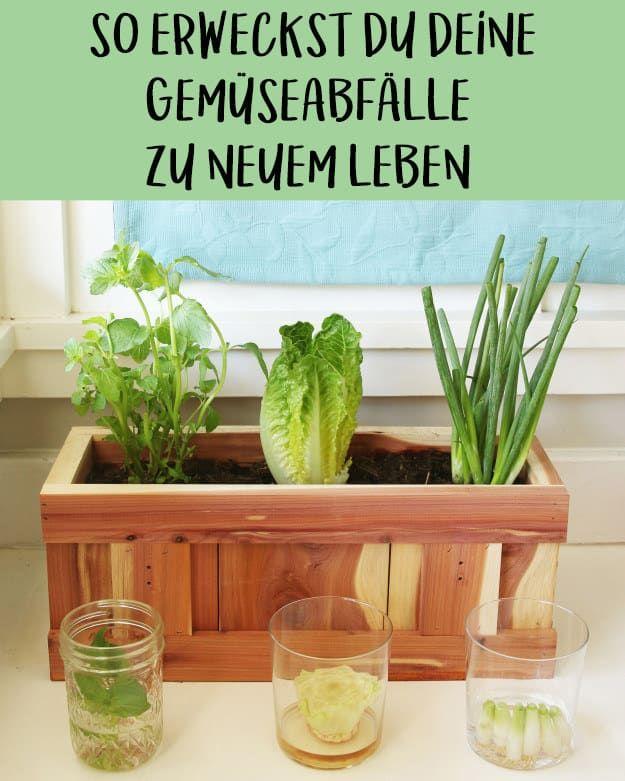 So erweckst du deine Gemüsereste zu neuem Leben
