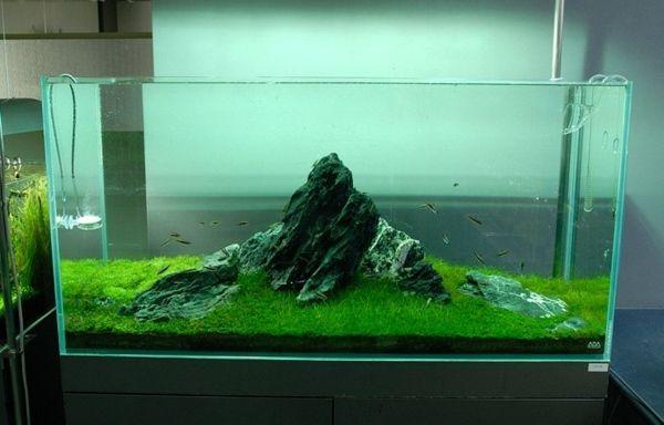 moderne aquarium deko – ragopige, Modern Dekoo