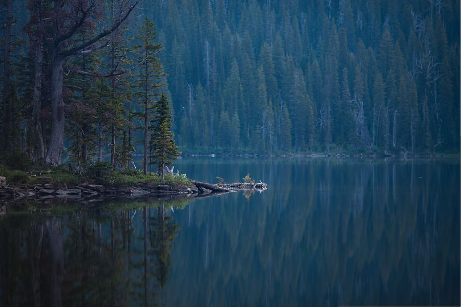 Forest, Lake