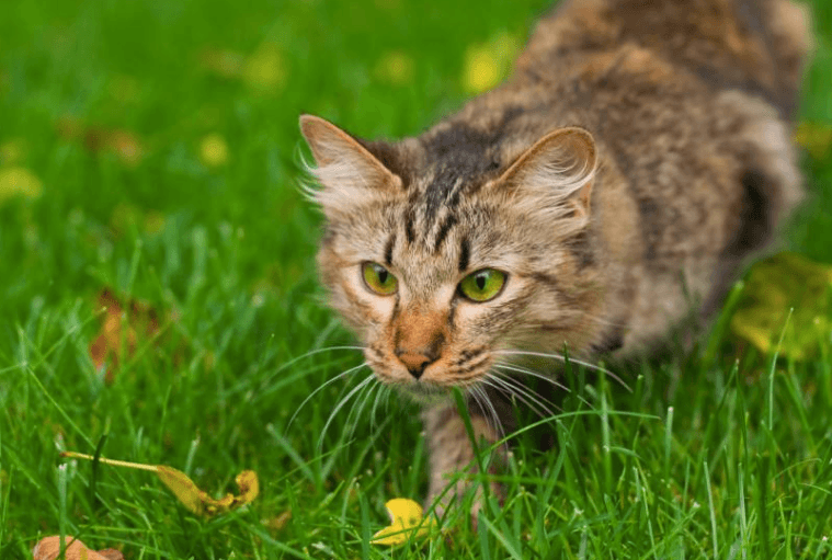 Why Do Cats Chatter? Best cat breeds, Cat breeds, Cats