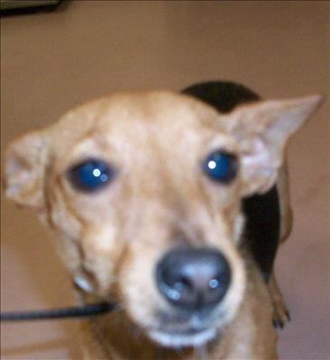 This DOG IDA463658 located at Harris County Animal