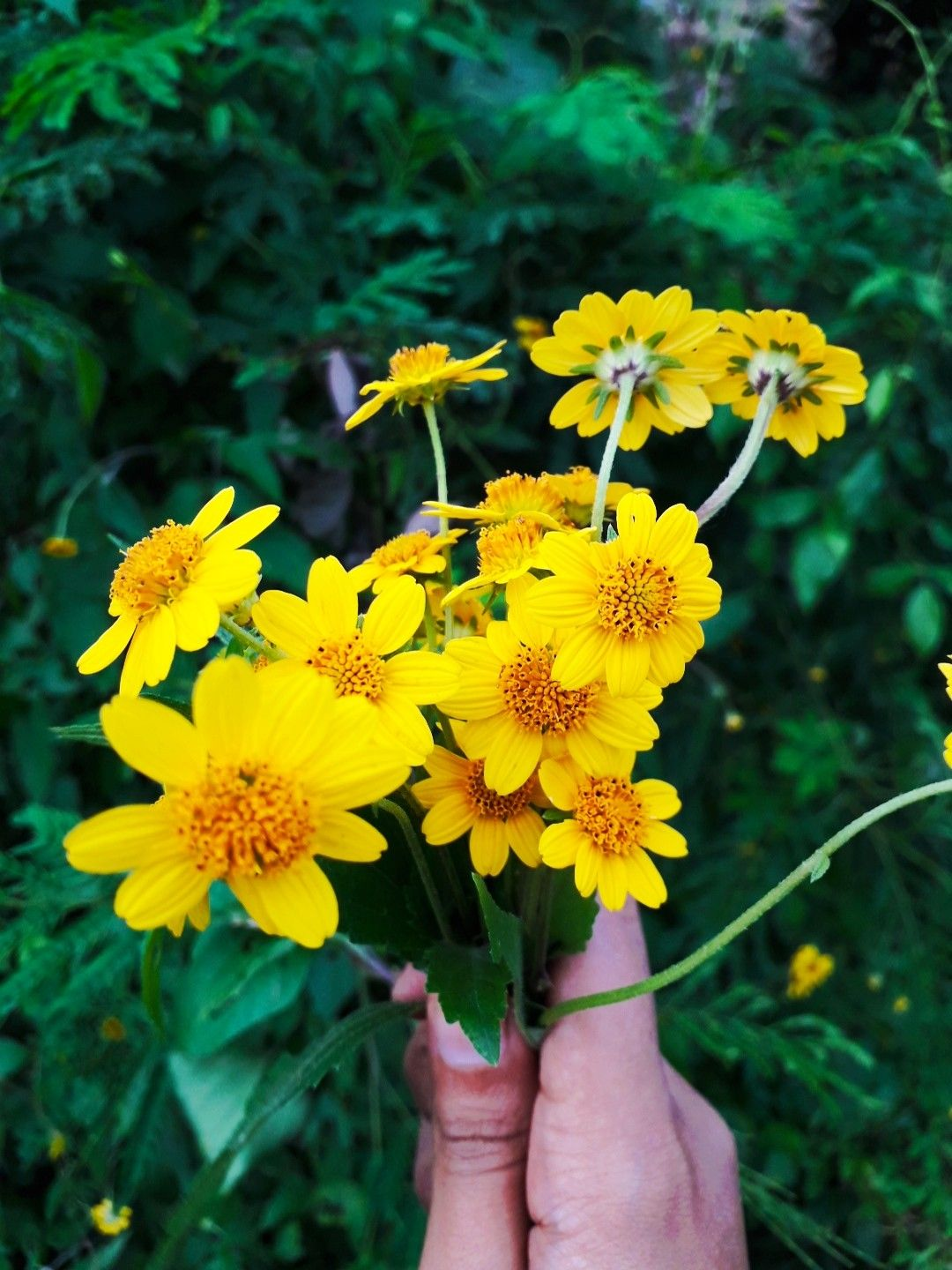Wild Flower I Pick It On The Road But I See It Like Small Sunflower Small Sunflower Wild Flowers Flowers