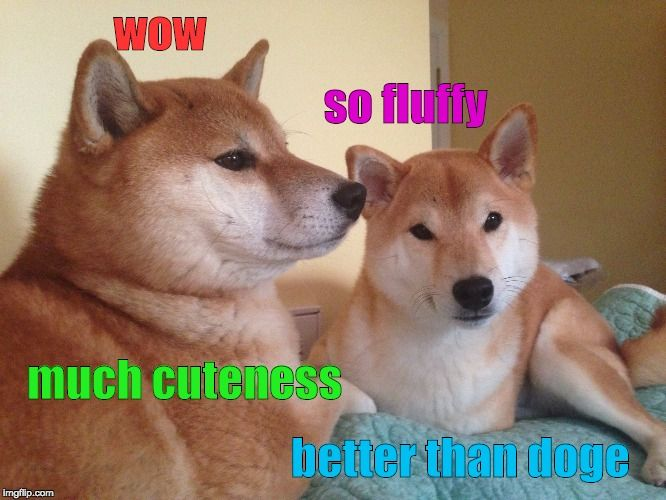 25 Best Memes About Doggo Meme Template Doggo Meme Template