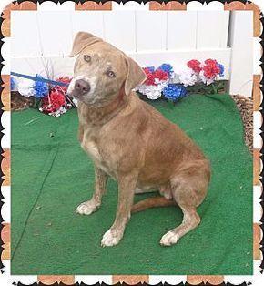 Pictures Of Aida See Also Baxter A Plott Hound Labrador Retriever Mix For Adoption In Marietta Ga Who Needs Dog Adoption Plott Hound Mix