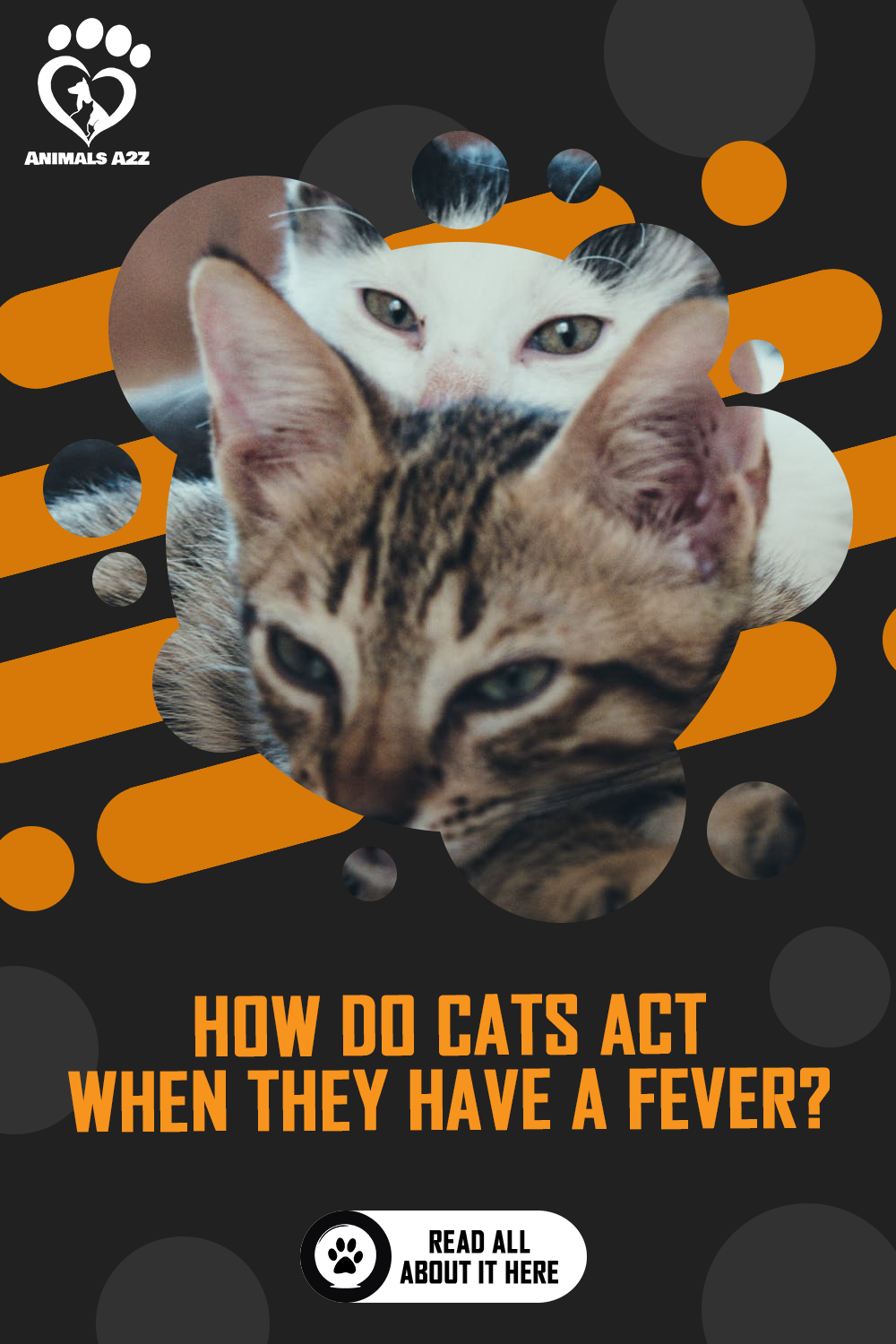 How Do Cats Act When They Have A Fever Detailed Answer Act Answer Cats Detailed Fever In 2020 Pet Cancer Awareness Pet Cancer Sick Cat