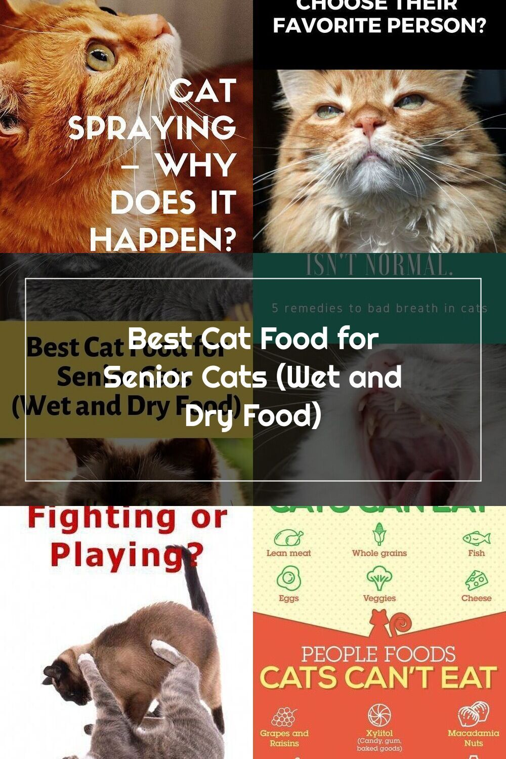 Best Cat Food For Senior Cats Wet And Dry Food Whether You Re Thinking In 2020