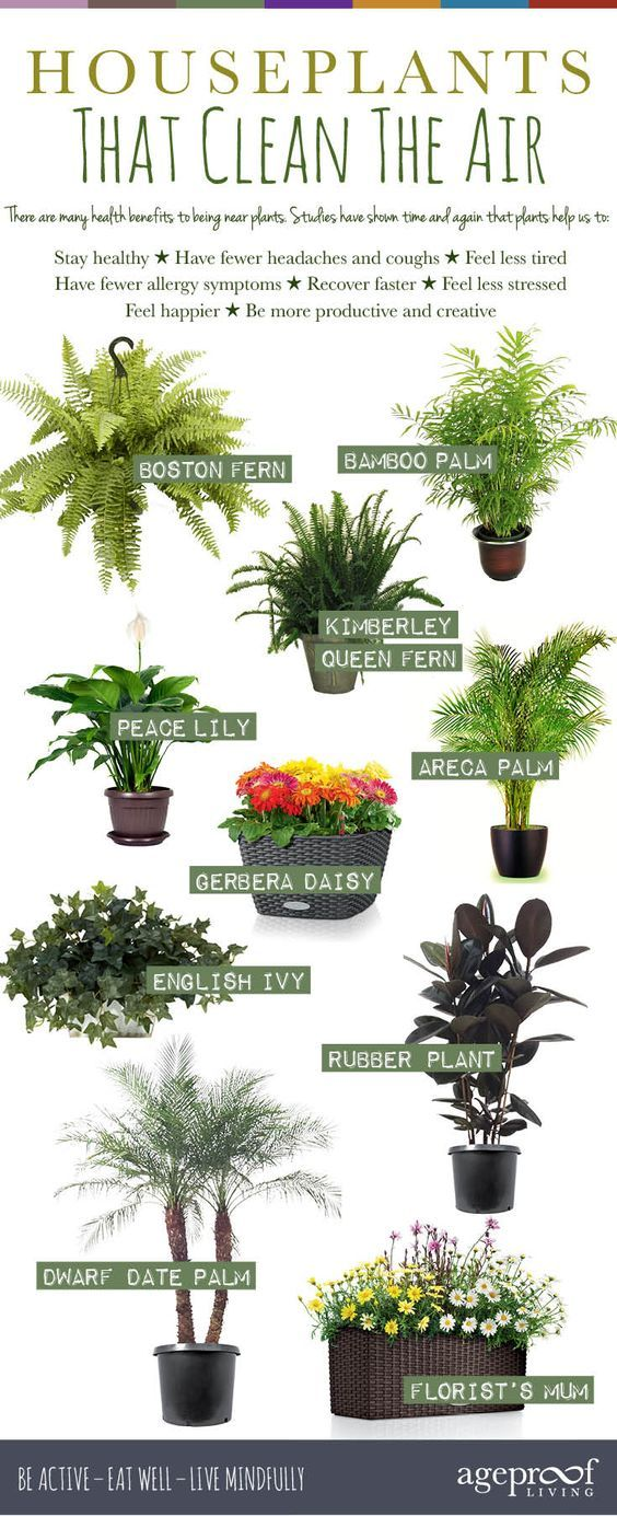 The Top 10 Houseplants For Cleaning Your Indoor Air Get One Today
