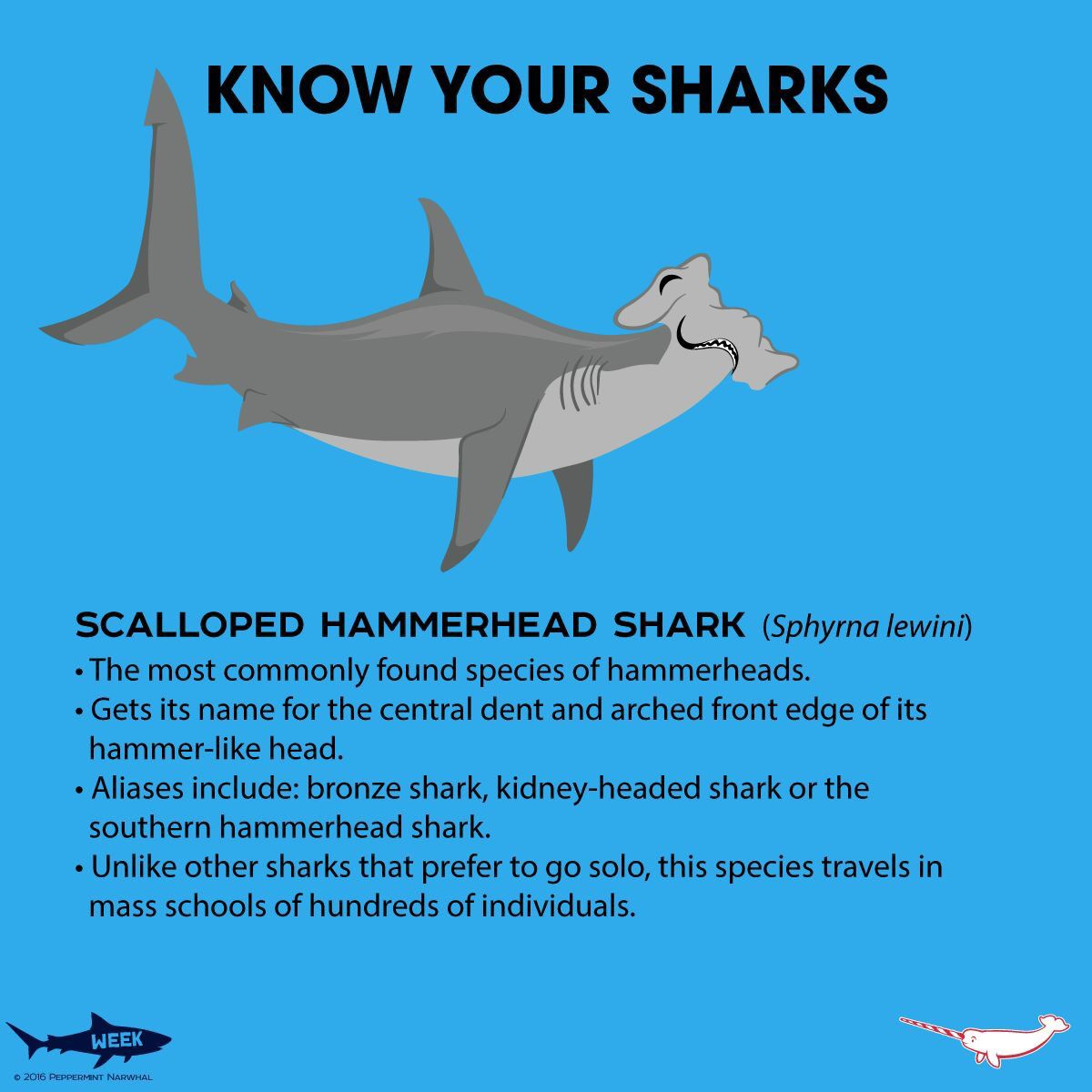 Know Your Scalloped Hammerhead Shark