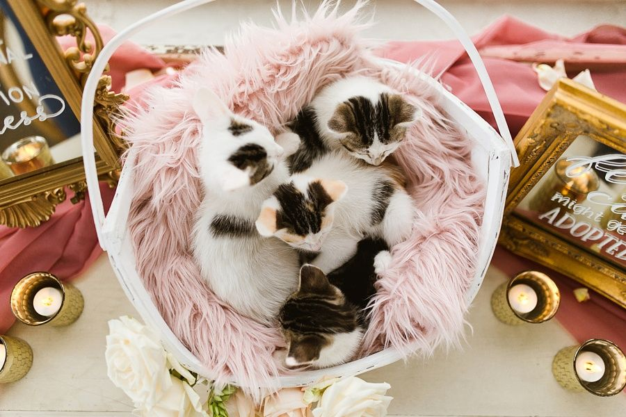 You Have to See This Wedding, Right MEOW! Cat wedding