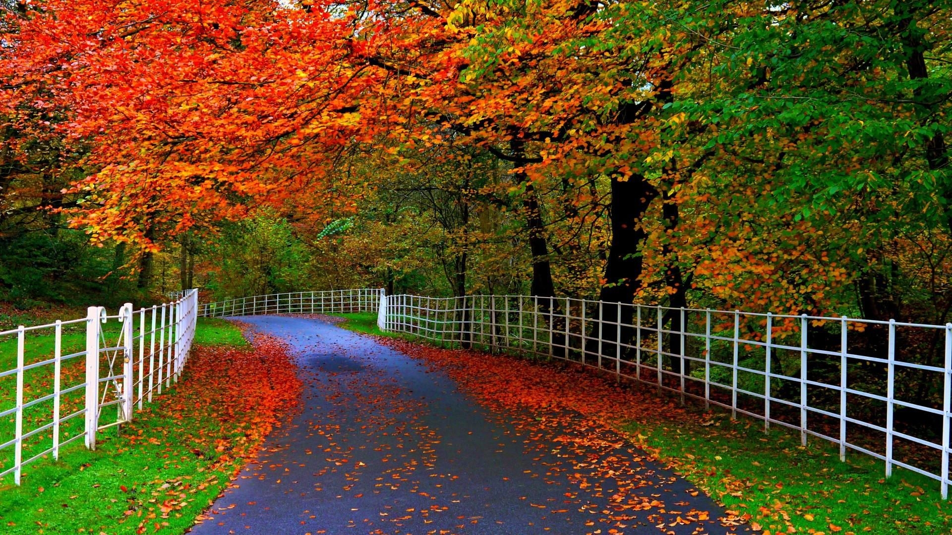 Forests Parks Trees Leaves Roads Fences Natural Beauty Of Autumn