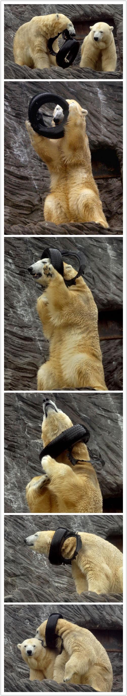 polar bears necklace